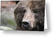 Grizzley - 0019 Greeting Card