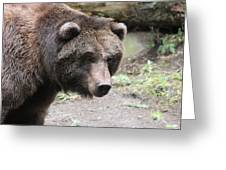 Grizzley - 0021 Greeting Card