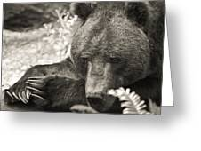 Grizzly At Rest Greeting Card