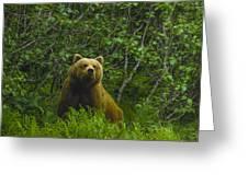 Grizzly Bear Alaska Greeting Card