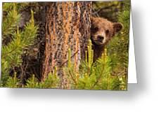 Grizzly Bear Cub Up A Tree, Yukon Greeting Card