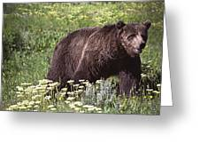 Grizzly Bear In Yellowstone Neg.28 Greeting Card