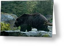 Grizzly Bear Or Brown Bear Greeting Card