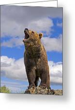 Grizzly Bear Roaring Greeting Card