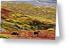 Grizzly Bears And Fall Colours, Denali Greeting Card