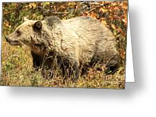 Grizzly Camouflage Greeting Card