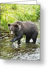 Grizzly Cub Catching Fish In Fish Creek Greeting Card