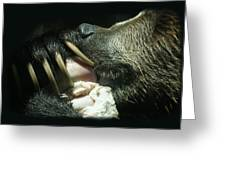 Grizzly Eating Greeting Card
