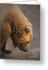 Grizzly Hanging Head Greeting Card