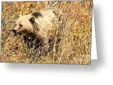 Grizzly In The Brush Greeting Card