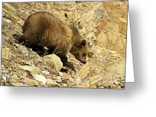 Grizzly On The Rocks Greeting Card