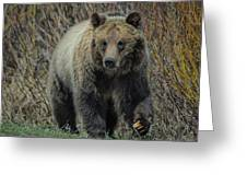 Grizzly Ramble Greeting Card