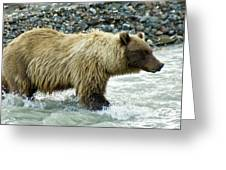 Grizzly Sow In Denali Greeting Card