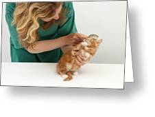 Grooming A Kitten Greeting Card