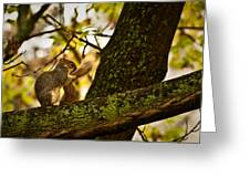 Grooming Grey Squirrel Greeting Card