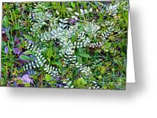 Ground Cover Greeting Card