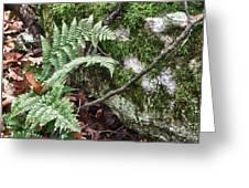 Ground Foliage Near Mountain Lake Greeting Card