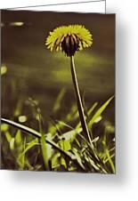 Ground Level Sun Greeting Card by Odd Jeppesen