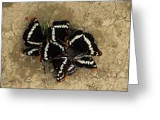 Group Of Butterflies Greeting Card