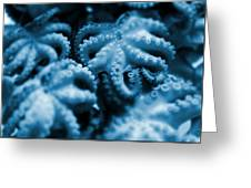Group Of Octopuses Greeting Card by Victor Habbick Visions