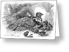 Grouse And Young Greeting Card