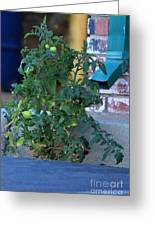 Grow Where You Are Planted Greeting Card