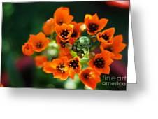 Growing Nebula Greeting Card