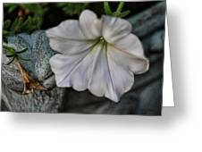 Grundgy Petunia Greeting Card