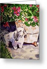 Guarding Geranium Sketchbook Project Down My Street Greeting Card