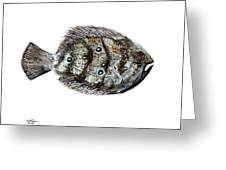 Gulf Flounder Greeting Card