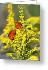 Gulf Fritilaries On Golden Rod Greeting Card