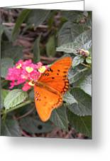 Gulf Fritillary Butterfly At Work Greeting Card