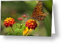 Gulf Fritillary Butterfly On Colorful Lantana  Greeting Card