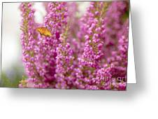 Gulf Fritillary Butterfly On Passionate Pink Flowers Greeting Card