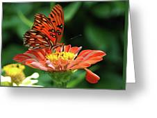Gulf Fritillary On Zinnia Greeting Card