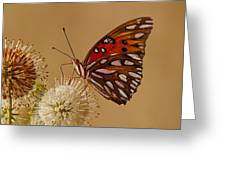 Gulf Frittilary Greeting Card