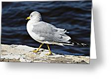 Gull 2 Greeting Card