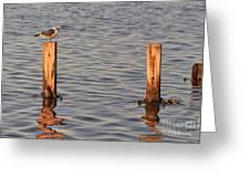 Gull At Sunset Greeting Card