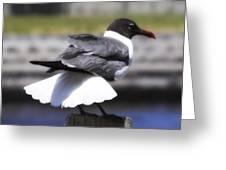 Gull Dance Greeting Card