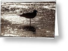 Gull In Silver Tidal Pool Greeting Card