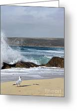 Gull On The Sand Greeting Card