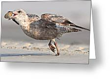 Gull Taking Off Greeting Card
