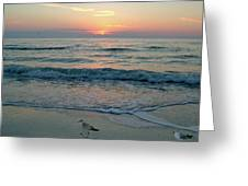 Gulls At Sunset On The Gulf Greeting Card