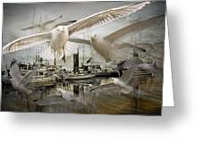 Gulls In The Harbor Greeting Card