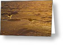 Gulls Searching For A Meal Greeting Card