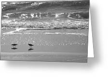 Gulls Taking A Walk Greeting Card