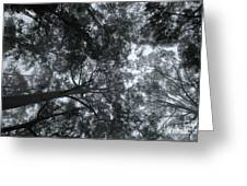 Gum Forest Australia 1 Greeting Card
