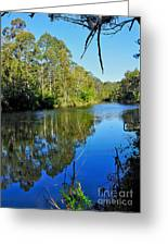 Gums Along The River Greeting Card