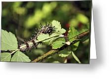 Gypsy Moth Larva Chomp Greeting Card