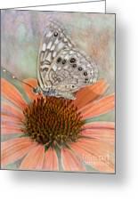 Hackberry Emplorer Butterfly Greeting Card